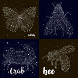蝴蝶,飞行,章鱼,蜂,一套星座 免版税库存图片