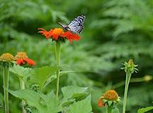 蝴蝶他们吮花蜜 免版税库存照片
