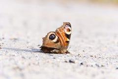 蝴蝶死在街道上 免版税库存图片