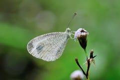 蝴蝶(灵魂)在草 免版税库存图片