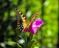 蝴蝶1000片树荫在一个晴天 免版税库存照片