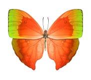 蝴蝶绿色桔子 免版税图库摄影