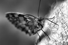 蝴蝶细节  库存照片