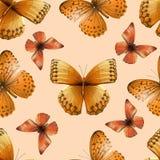 05蝴蝶 库存照片