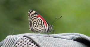 88蝴蝶 免版税库存照片