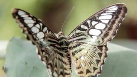 蝴蝶 影视素材