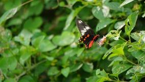 蝴蝶A解救鸟 免版税库存图片