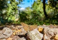 蝴蝶perspectivefrom地面 免版税库存图片