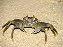 螃蟹。 库存图片