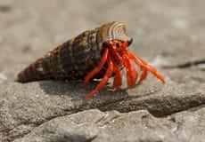 螃蟹一点 免版税库存照片