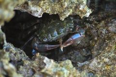 螃蟹吃 免版税库存图片