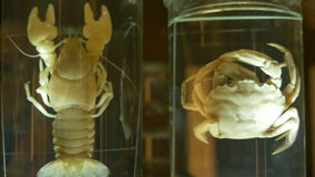 螃蟹和小龙虾保存的 股票录像