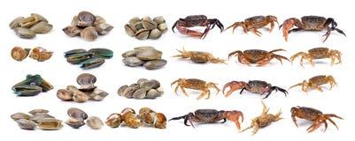 螃蟹和搪瓷金星壳,蛤蜊贝类,海浪蛤蜊,淡菜, 免版税库存图片