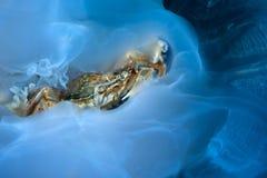 螃蟹和水母 免版税库存图片