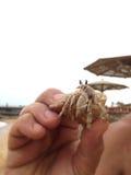 螃蟹在人的手上 库存照片