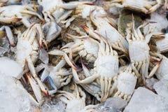 螃蟹在市场上 库存照片