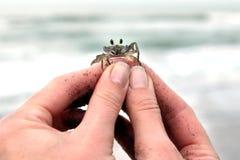 螃蟹在手上 免版税图库摄影