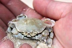 螃蟹在手中小心地 免版税库存照片