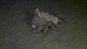 螃蟹在海底去在水面下在野生生物菲律宾世界  影视素材