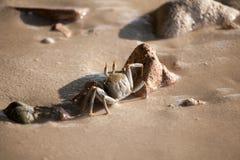 螃蟹在海滩跑 免版税库存照片
