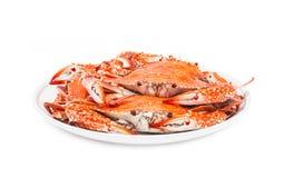 螃蟹在白色背景隔绝的蒸的海鲜 免版税图库摄影