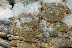 螃蟹在鱼市上 图库摄影