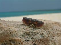 螃蟹壳 库存照片