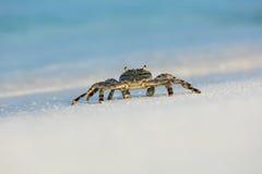 螃蟹宏观照片在海滩的 图库摄影