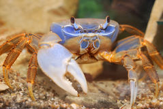 螃蟹彩虹 库存照片