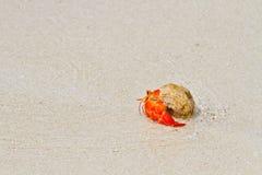 螃蟹往走的隐士海运 免版税库存照片