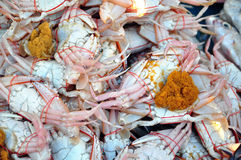 螃蟹怂恿新鲜 免版税库存图片