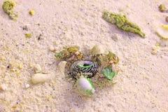 螃蟹或壳 库存图片