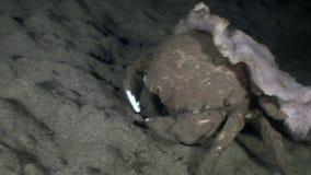 螃蟹接近在海底去在水面下在野生生物菲律宾世界  影视素材