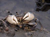 螃蟹提供 免版税库存照片