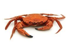 螃蟹查出的唯一 库存图片