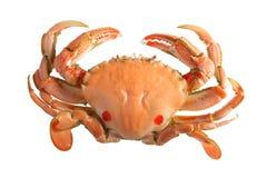 螃蟹查出的白色 库存图片