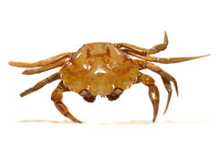 螃蟹桔子 免版税图库摄影