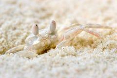 螃蟹模仿奇怪 免版税库存照片