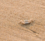 螃蟹沙子 库存照片