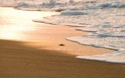 螃蟹沙子 免版税图库摄影