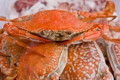 螃蟹海运 免版税库存图片