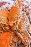 螃蟹海运 库存照片