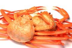 螃蟹深红雪 免版税库存图片