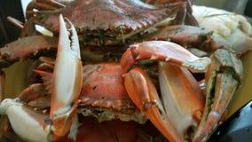 螃蟹煮沸 免版税库存照片