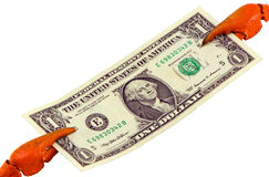 螃蟹爪暂挂美国美元查出的纸张钞票 图库摄影