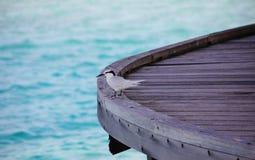 螃蟹珩科鸟, Dromas ardeola,在甲板 免版税库存照片