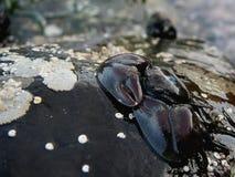 螃蟹瓷 库存照片