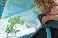 螃蟹看守人 图库摄影