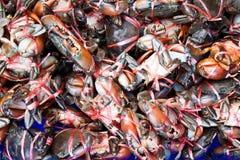 螃蟹红色 免版税图库摄影