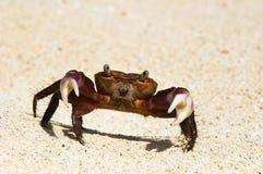 螃蟹纵向 免版税图库摄影